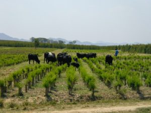 Drought stokes battle for pastures in Kenya's northern regions